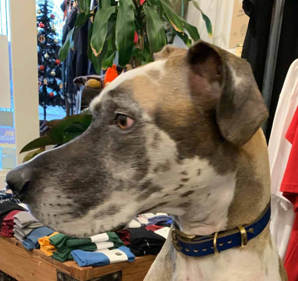 Making a custom dog collar video